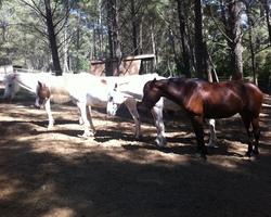 Écurie de propriétaire et pension de chevaux Toulon - Le Paddock